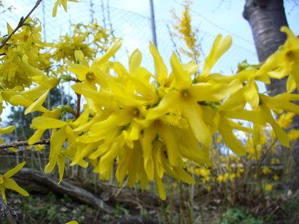 FOTKA - Samý květ,, bez lístečku