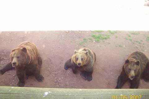 FOTKA - medvědi