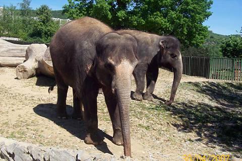 FOTKA - sloníci