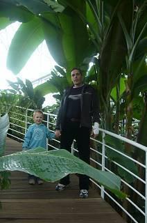 FOTKA - Syn a manžel pod banánovníkem