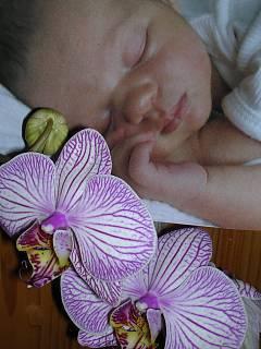 FOTKA - sladký spánek