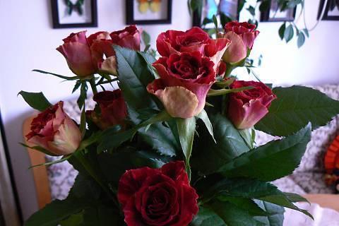 FOTKA - růže 6