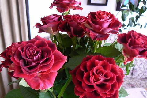 FOTKA - kytice,tmavě rudá