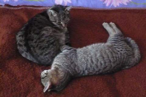 FOTKA - Takle si hoví 12.letá kočka se synem