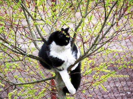 FOTKA - Kočičí průzkumnice.