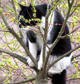 FOTKA - Kočičí průzkumnice Boženka