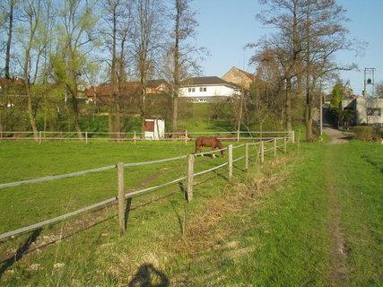 FOTKA - Hnědý kůň na pastvě