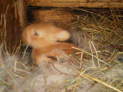 FOTKA - naši králíci 3