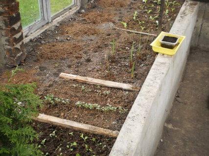 FOTKA - Můj skleník na jaře  2