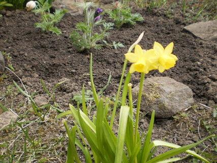FOTKA - Zahrádka -květy 2