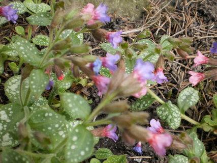 FOTKA - Skalka -květy
