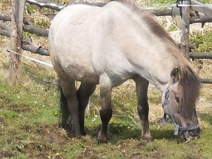 FOTKA - Sousedův koník