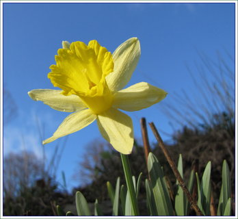 FOTKA - Narcis zespodu