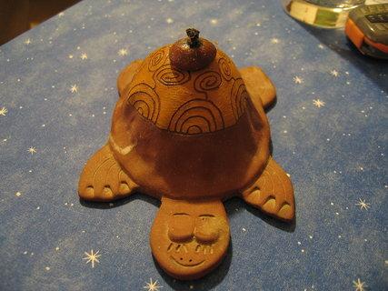 FOTKA - želva   5