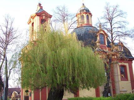 FOTKA - vrba u kostela - Kunratice