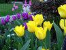 zahradní koutek s tulipány