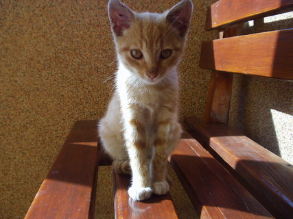 FOTKA - Kočičák ještě jednou