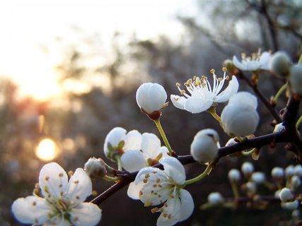 FOTKA - Ba i květy na keři - na sluníčko čekají