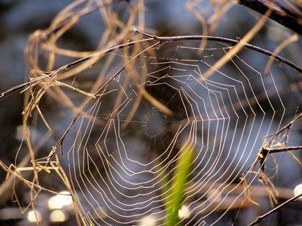 FOTKA - Kdopak to tu líčí síťku - pavouk je tím znám