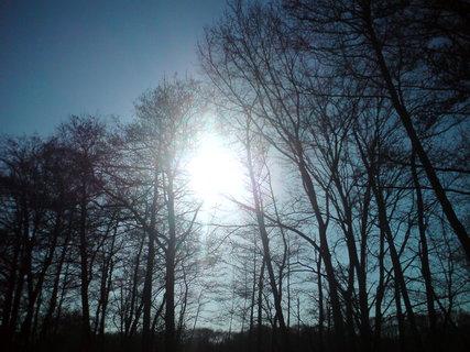FOTKA - Sluníčko ve větvích