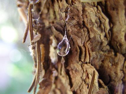 FOTKA - když strom pláče..