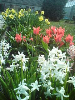 FOTKA - Kytičky na zahradě