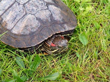 FOTKA - Želvička na návštěvě
