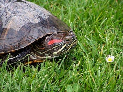 FOTKA - Krásně zbarvená želvička