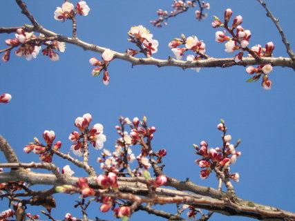 FOTKA - Rozkvitnutá jar