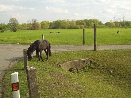 FOTKA - Koně na pastvě