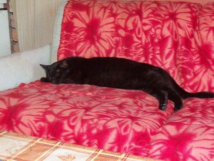 FOTKA - Kačenka přes půl gauče