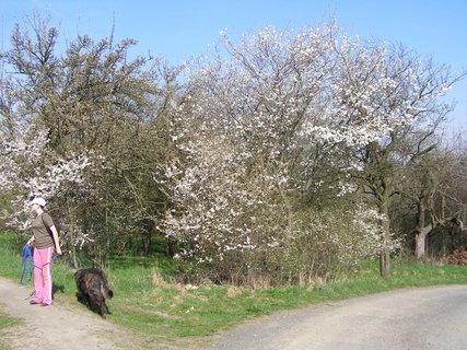 FOTKA - vše kvete