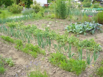 FOTKA - Už se těším na letošní úrodu-loňská