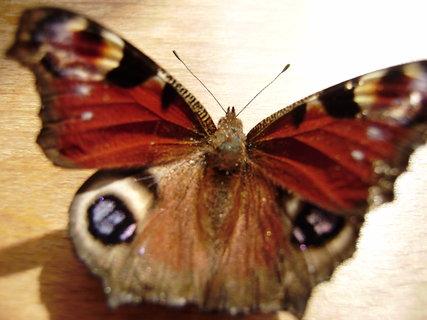 FOTKA - motýl.