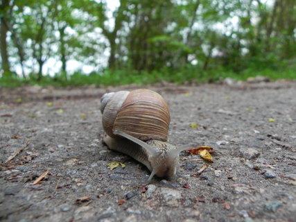 FOTKA - nedaleko se jeden toulal, tak jsem mu domluvila ať uteče