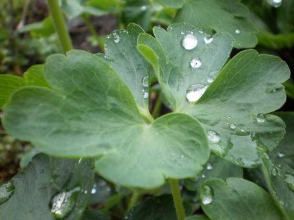 FOTKA - Je po dešti