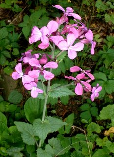 FOTKA - fialová kytička