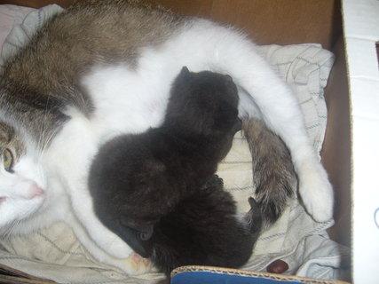 FOTKA - Minda s novými koťaty