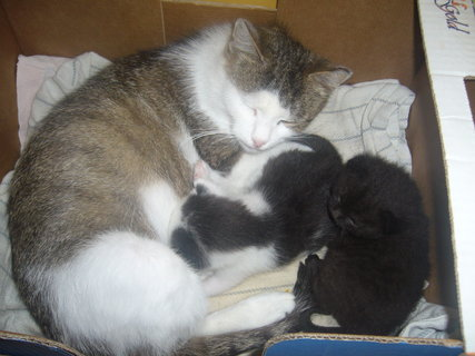 FOTKA - Minda s novými koťaty.