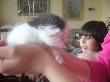FOTKA - Nové kotě