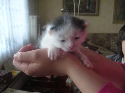 FOTKA - Nové kotě.
