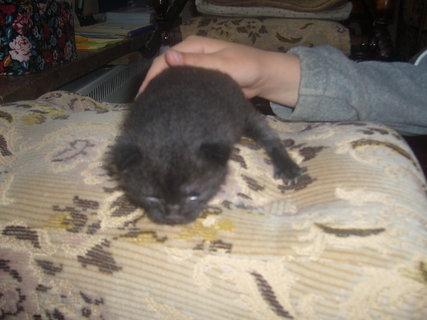 FOTKA - černé kotě