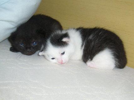 FOTKA - jsme ještě malinký koťata