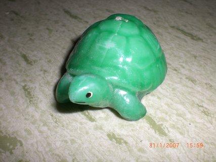 FOTKA - želva - svíčka
