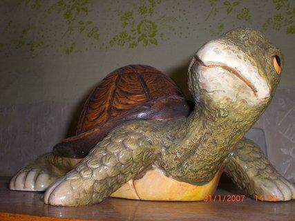 FOTKA - želva velká