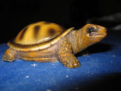 FOTKA - želva pěkná