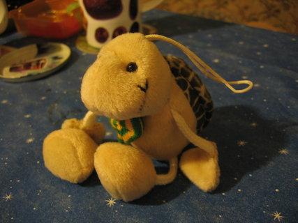 FOTKA - želva roztomilá