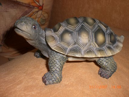 FOTKA - želva ze Španělska