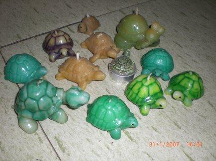 FOTKA - svíčkové želvy
