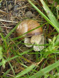 FOTKA - Šnek v trávě